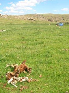 FOTKA - Mongolsko, cesta do Charkorinu 8