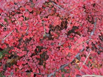 FOTKA - jeseň v červenom