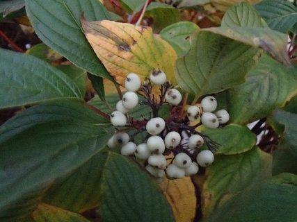 FOTKA - plody jesene85