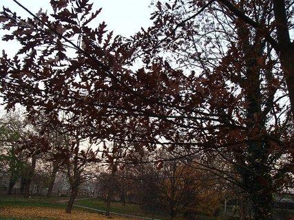 FOTKA - stromy v parku14