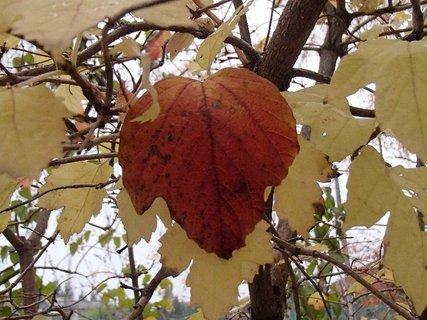 FOTKA - jeseň v parku,