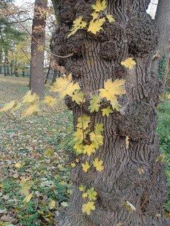 FOTKA - zaujal ma tento peň stromu