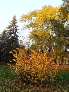 FOTKA - slnkom zaliate stromy v parku