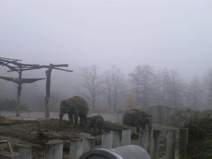 FOTKA - Sloní rodinka