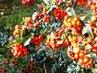 Podzim barví 40