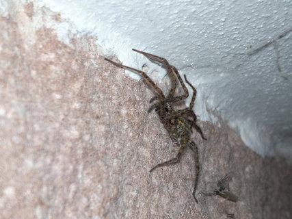 FOTKA - Pavouk na zdi