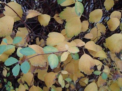 FOTKA - zelená so žltou