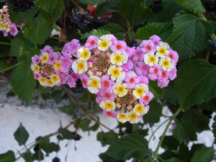 FOTKA - Místní květena