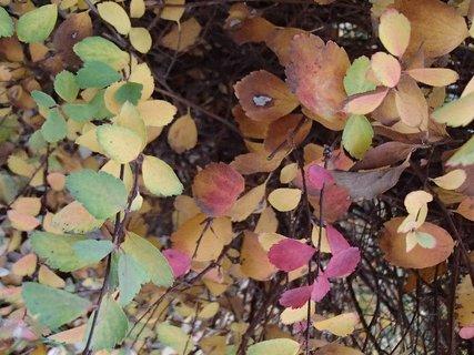 FOTKA - lístie rôznej farby.