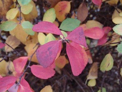 FOTKA - 2012 farby jesene242