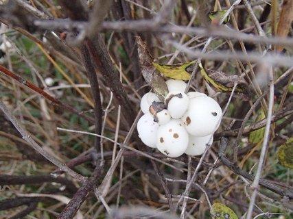 FOTKA - biele guličky