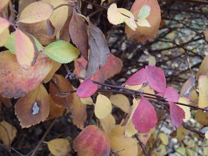 FOTKA - rôzne farby na kríku