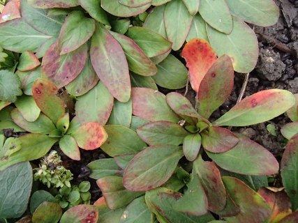 FOTKA - 2012 farby jesene246