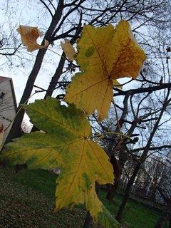 FOTKA - posledné listy stromu