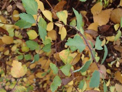 FOTKA - 2012 farby jesene247