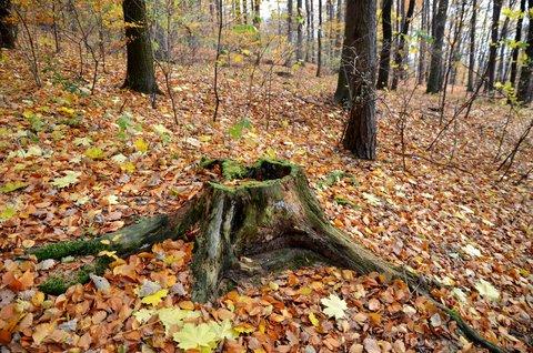 FOTKA - Podzimn� toul�n� p��rodou
