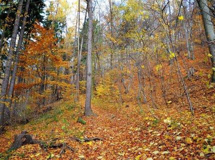 FOTKA - Zlatý podzim