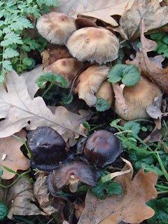 FOTKA - hríby v parku,