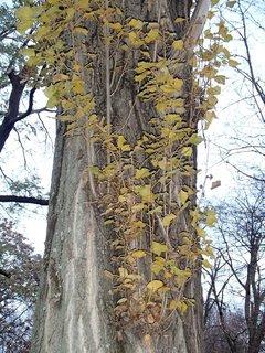 FOTKA - kmeň stromu