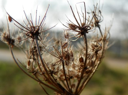 FOTKA - Na návštěvě v odkvetlém plevelu