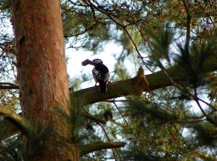 FOTKA - Šmírování v koruně stromu