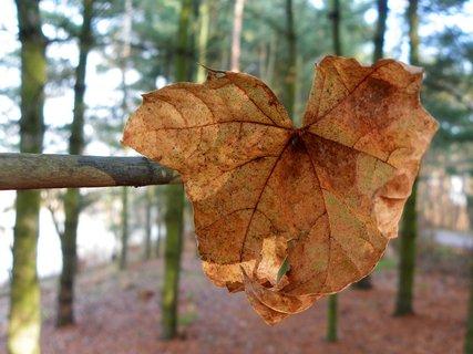 FOTKA - Lesní ukazatel
