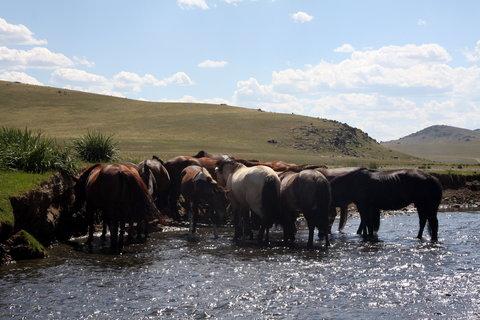 FOTKA - Mongolsko, Bulgan 14