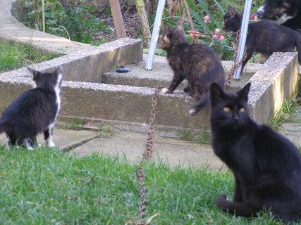 FOTKA - Kočičky .