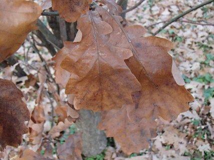 FOTKA - hnedá jeseň