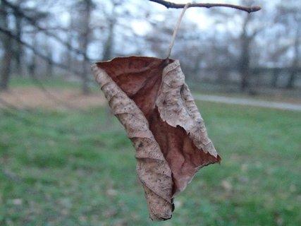 FOTKA - uschínajúci list stromu