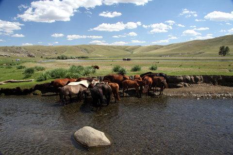 FOTKA - Mongolsko, Bulgan 16