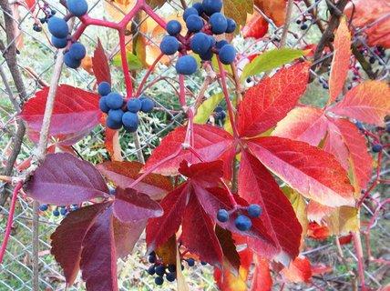 FOTKA - Podzim barví 44