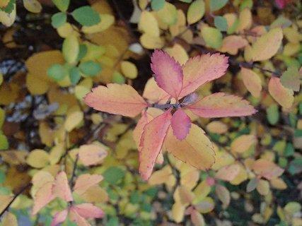 FOTKA - 2012 farby jesene260