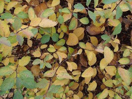 FOTKA - 2012 farby jesene264