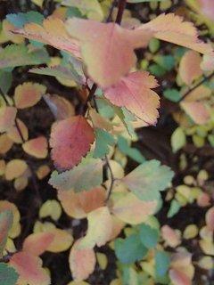 FOTKA - 2012 farby jesene265