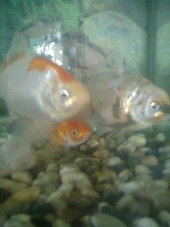 FOTKA - rybičky