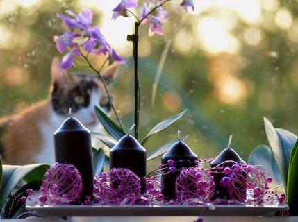 FOTKA - Advent trochu jinak Dorotka se taky diví :-)
