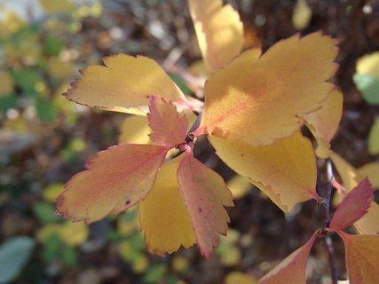 FOTKA - 2012 farby jesene268