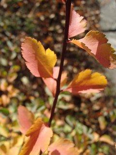 FOTKA - 2012 farby jesene269