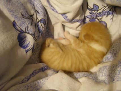 FOTKA - kotě v pelíšku