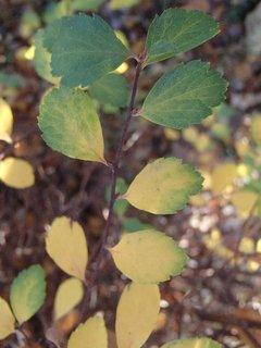 FOTKA - jesenná zelená so žltým