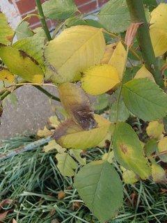 FOTKA - jesenná zelená so žltým.