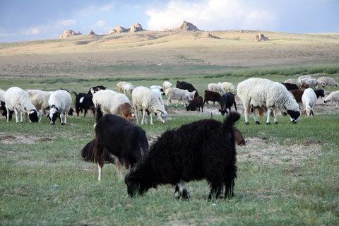 FOTKA - Mongolsko, Bulgan 51
