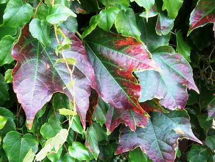 FOTKA - Podzim barví 47