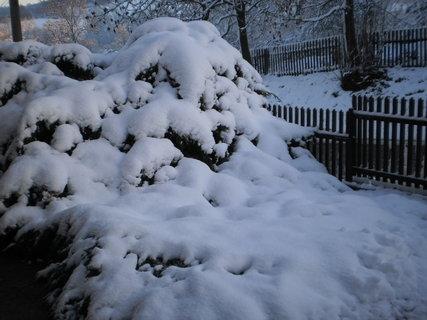 FOTKA - Od pátku zima