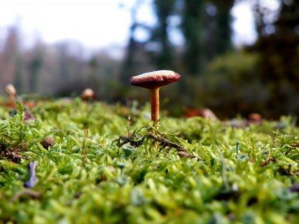 FOTKA - Listopadová mini houba