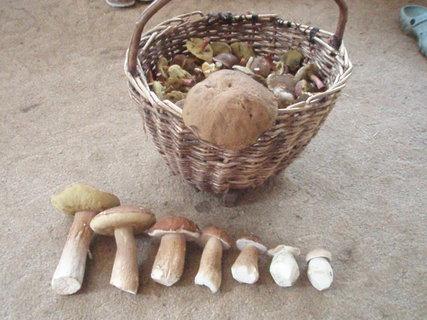 FOTKA - houby