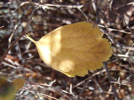 FOTKA - žltý list.