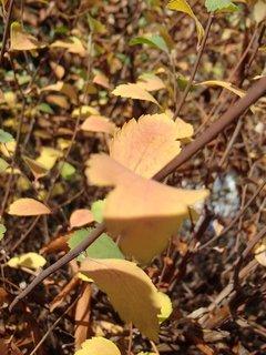 FOTKA - 2012 farby jesene282