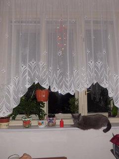 FOTKA - Nová záclona